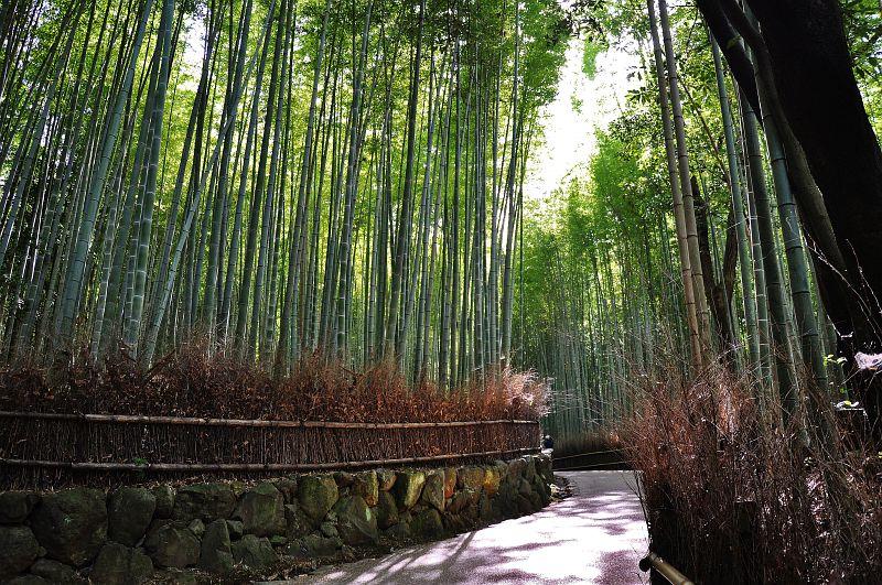 Lichtdurchfluteter Bambuswald in Arashiyama