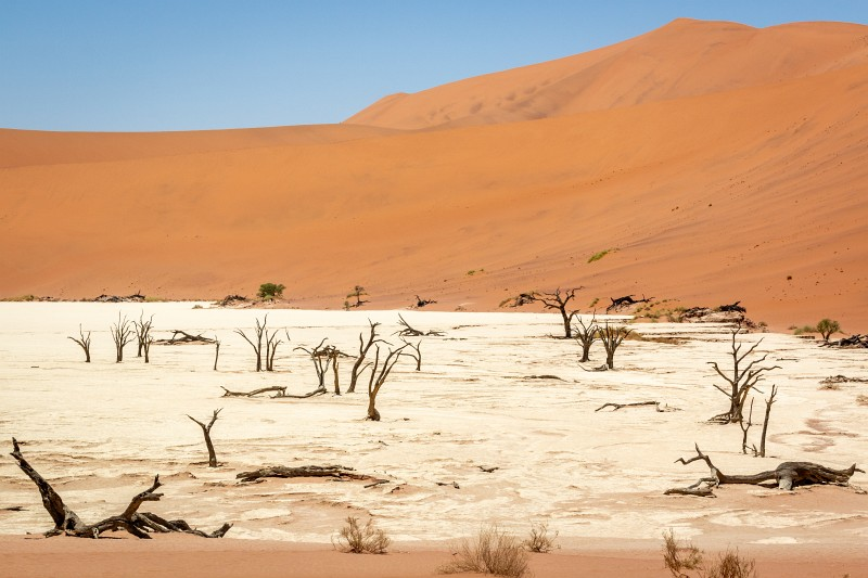Dedvlei Sossusvlei in Namibia