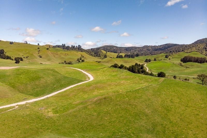 Die grüne Landschaft Neuseelands