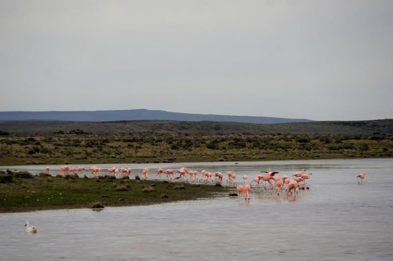 Flamingos Patagonien