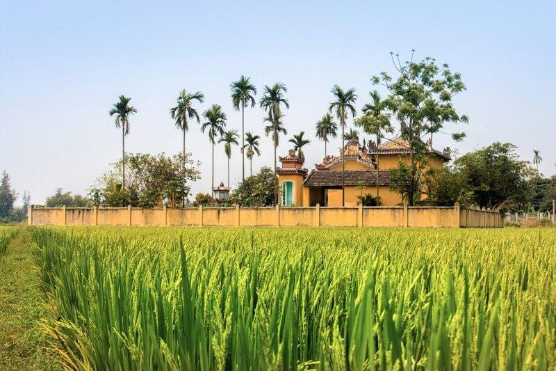 Reisfelder Hoi An
