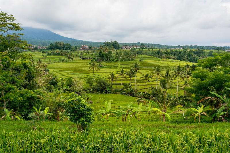 Jatiluwih - Balis schönste Reisterrassen - Unesco Weltkulturerbe
