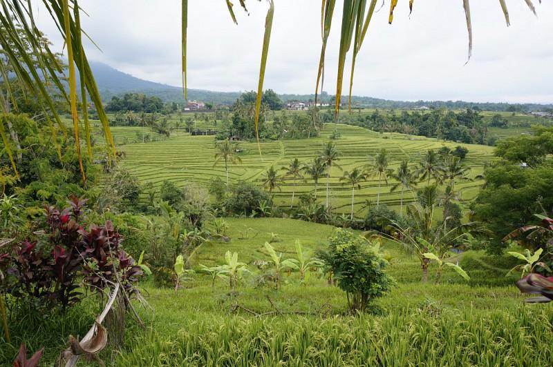Wunderschone Reisterrassen auf Bali