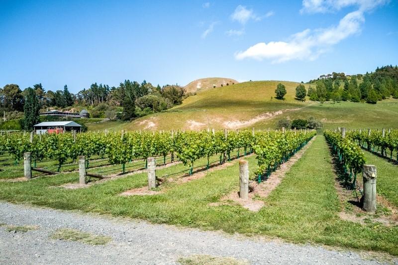 Weinfarm Nähe Napier in Neuseeland